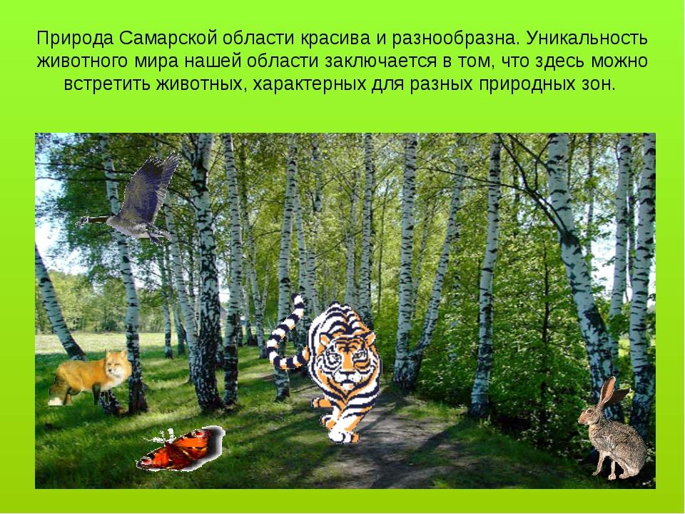 Природа Самарской области красива и разнообразна. Уникальность животного мира...