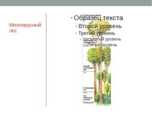 Многоярусный лес Схема многоярусного леса