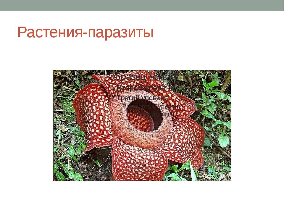 Растения-паразиты