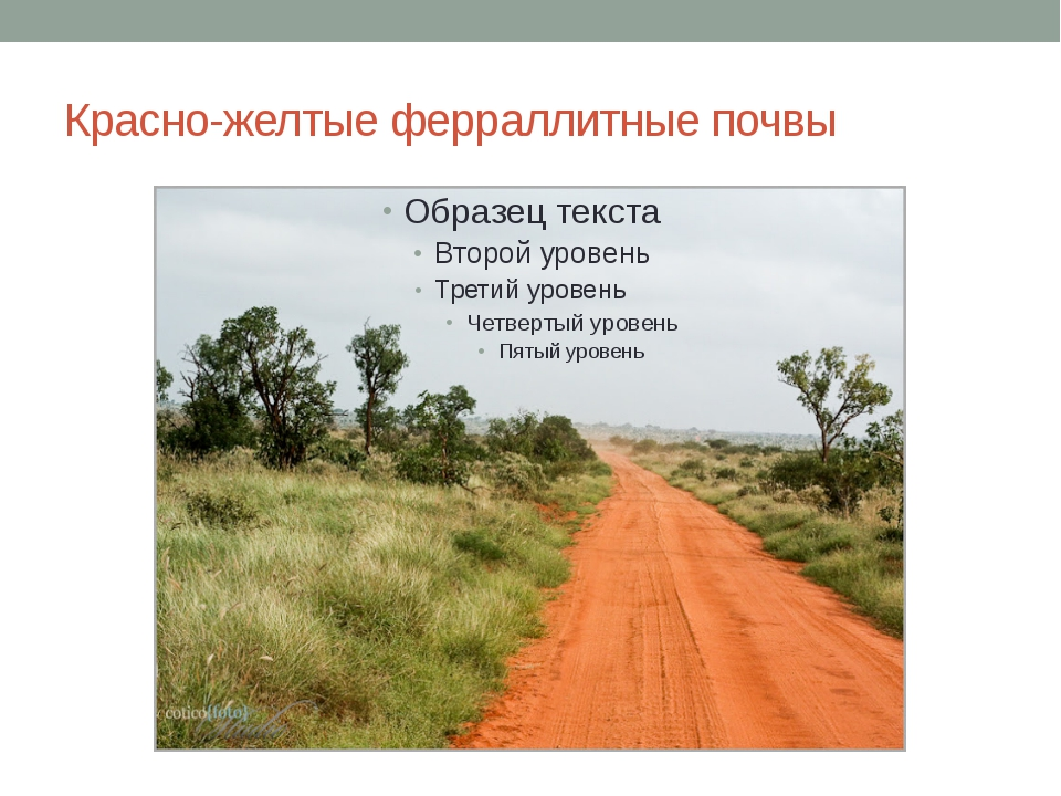 Красно-желтые ферраллитные почвы