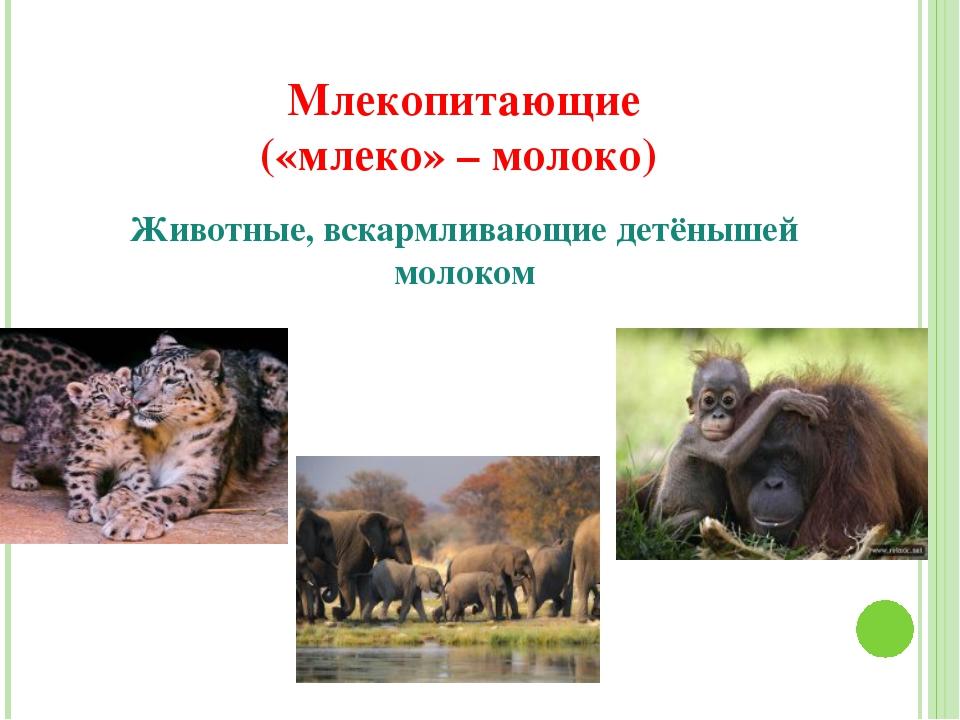 Млекопитающие («млеко» – молоко) Животные, вскармливающие детёнышей молоком