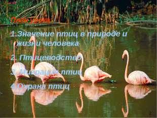 План урока: Значение птиц в природе и жизни человека Птицеводство Миграция пт