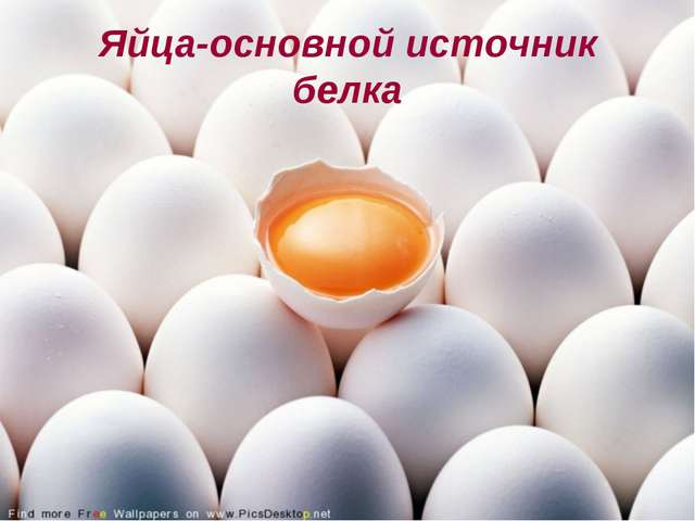 Яйца-основной источник белка