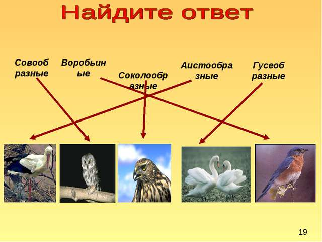 Совообразные Воробьиные Соколообразные Аистообразные Гусеобразные 19