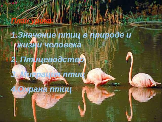 План урока: Значение птиц в природе и жизни человека Птицеводство Миграция пт...