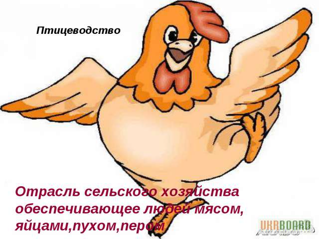 Птицеводство Отрасль сельского хозяйства обеспечивающее людей мясом, яйцами,п...