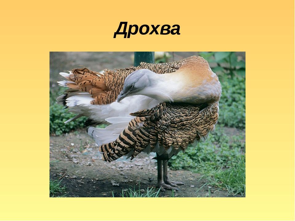 Дрохва