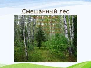 Смешанный лес