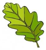 C:\Users\DNS\Desktop\Ирина\картинки\растения\дубовый лист.jpg