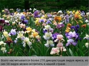 Всего насчитывается более 270 дикорастущих видов ириса, из них 58 видов можн