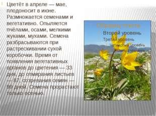 Цветёт в апреле — мае, плодоносит в июне. Размножается семенами и вегетативн