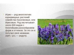 И́рис— род многолетних корневищных растений семейства Касатиковые, или Ирисо