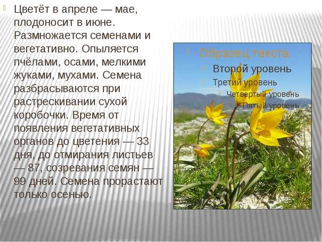Цветёт в апреле — мае, плодоносит в июне. Размножается семенами и вегетативн...