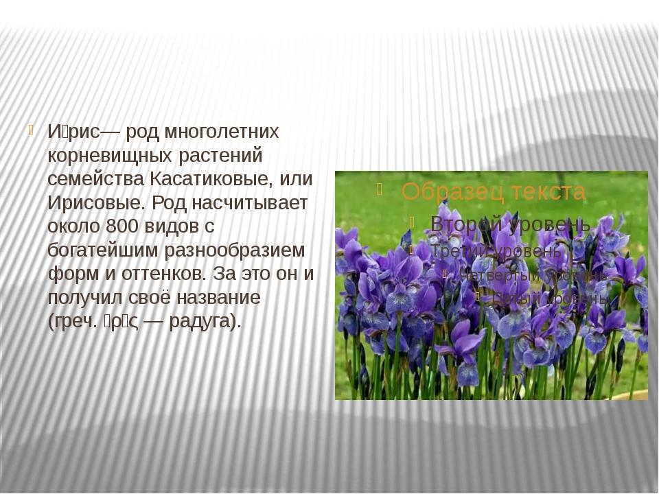 И́рис— род многолетних корневищных растений семейства Касатиковые, или Ирисо...