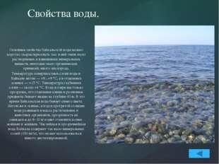 Животный и растительный мир Байкала. В Байкале водится более 2600 видов и раз