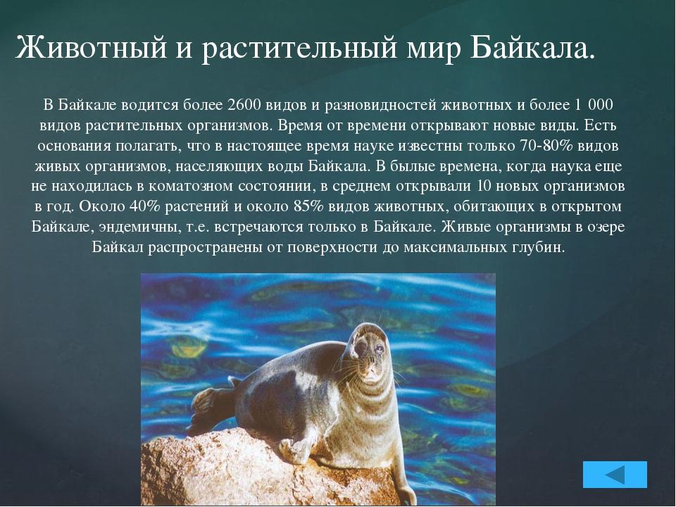 В озере насчитывается 58 видов рыб. Наиболее известные - омуль, сиг, хариус,...