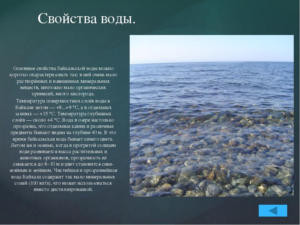 Животный и растительный мир Байкала. В Байкале водится более 2600 видов и раз...