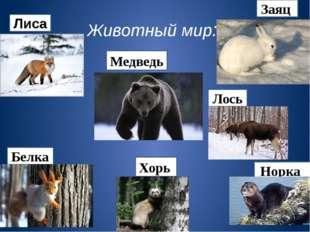 Животный мир: Заяц Лиса Белка Медведь Норка Хорь Лось