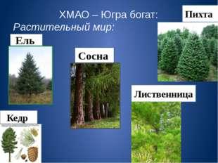 ХМАО – Югра богат: Растительный мир: Ель Сосна Пихта Лиственница Кедр