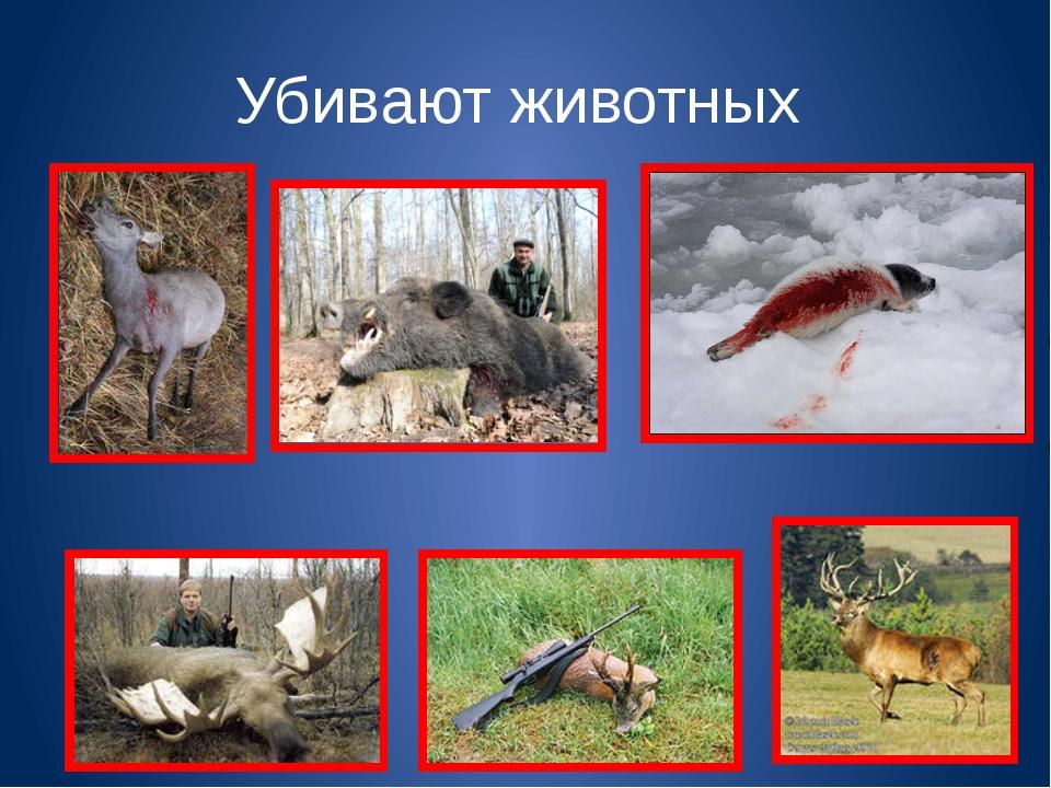 Убивают животных