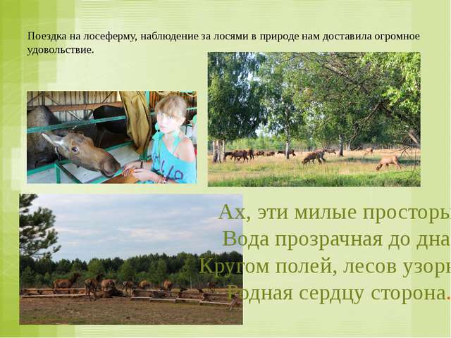 Поездка на лосеферму, наблюдение за лосями в природе нам доставила огромное у...