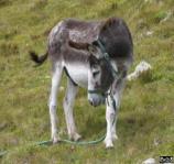 http://argymaq.kz/wp-content/uploads/2014/07/1357139056_donkey_equus_asinus.jpg