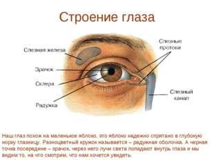 Строение глаза Наш глаз похож на маленькое яблоко, это яблоко надежно спрятан