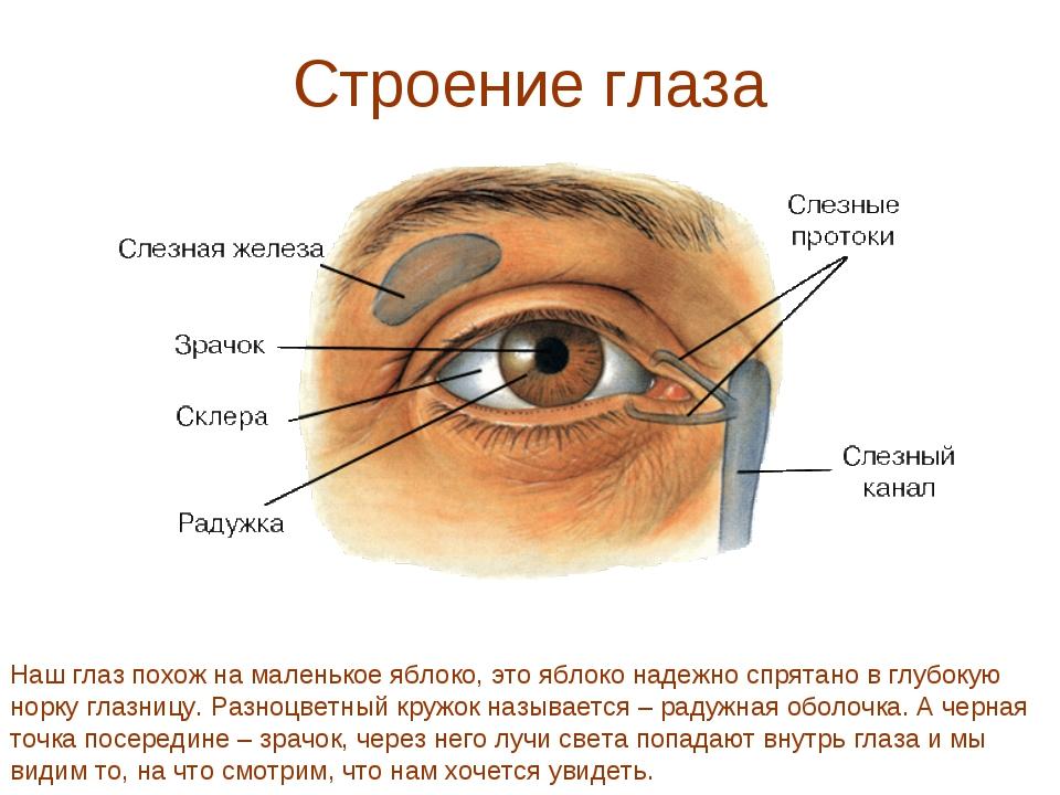 Строение глаза Наш глаз похож на маленькое яблоко, это яблоко надежно спрятан...