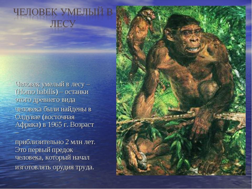 Человек умелый в лесу – (Homo habilis) – останки этого древнего вида человека...
