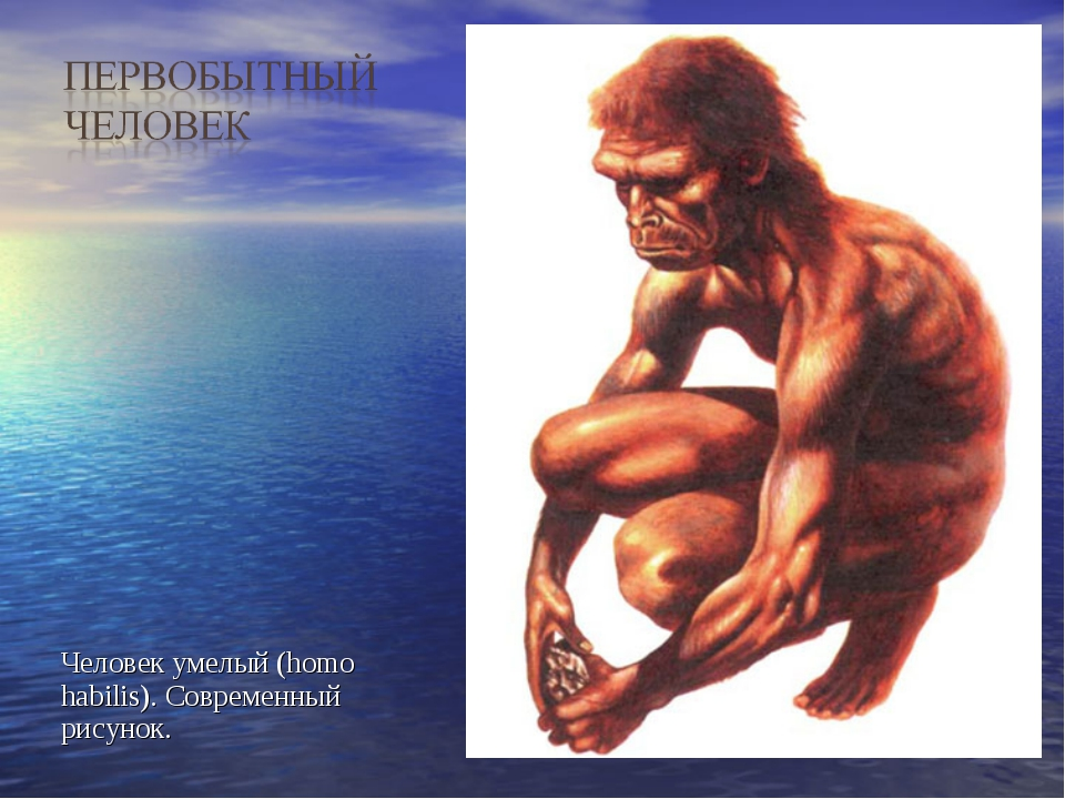 Человек умелый (homo habilis). Современный рисунок.