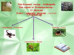 Тип Буынаяқтылар – Arthropoda Тип тармағы Хелицералылар – Сһеlicerata Класс Ө