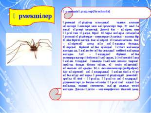 Өрмекшілер Өрмекшітәрізділер(Arachnida) Өрмекші тәрізділер класының тыныс ал