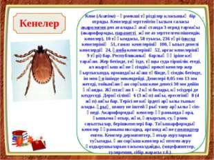 К Кенелер Кене(Acarіna) – өрмекші тәрізділер класының бір отряды. Кенелерді