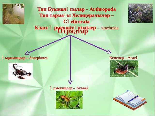 Тип Буынаяқтылар – Arthropoda Тип тармағы Хелицералылар – Сһеlicerata Класс Ө...