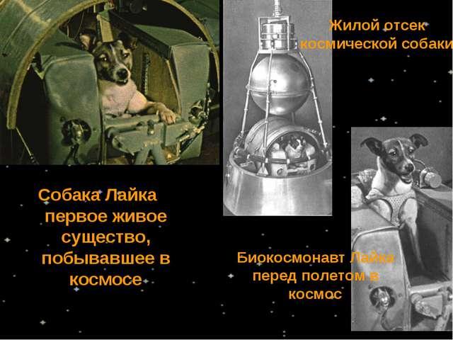 Собака Лайка первое живое существо, побывавшее в космосе Жилой отсек космичес...
