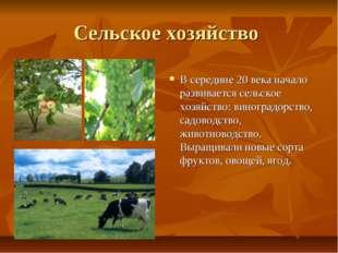 Сельское хозяйство В середине 20 века начало развивается сельское хозяйство: