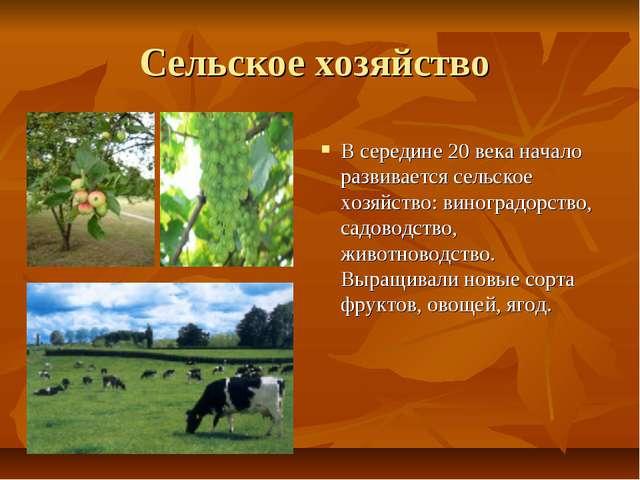 Сельское хозяйство В середине 20 века начало развивается сельское хозяйство:...
