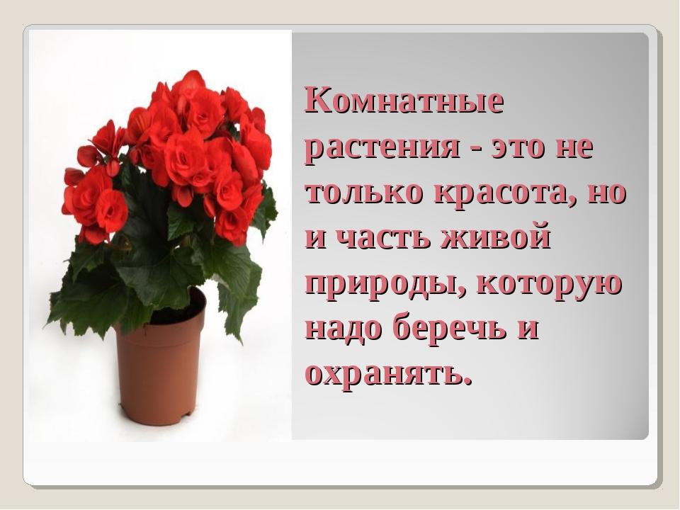 Комнатные растения - это не только красота, но и часть живой природы, котору...
