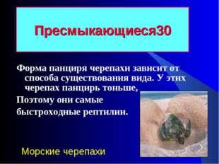 Форма панциря черепахи зависит от способа существования вида. У этих черепах
