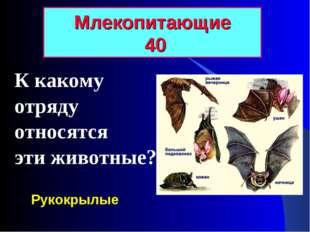 К какому отряду относятся эти животные? Млекопитающие 40 Рукокрылые