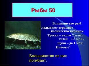 Большинство рыб откладывают огромное количество икринок. Треска – около 7 мл