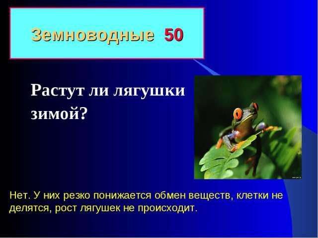 Растут ли лягушки зимой? Земноводные 50 Нет. У них резко понижается обмен вещ...