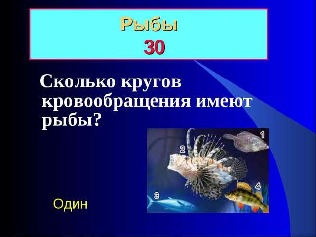 Сколько кругов кровообращения имеют рыбы? Рыбы 30 Один