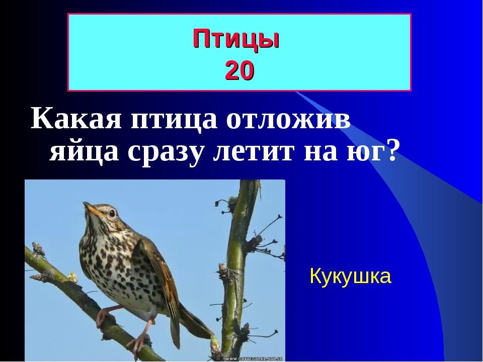 Какая птица отложив яйца сразу летит на юг? Птицы 20 Кукушка