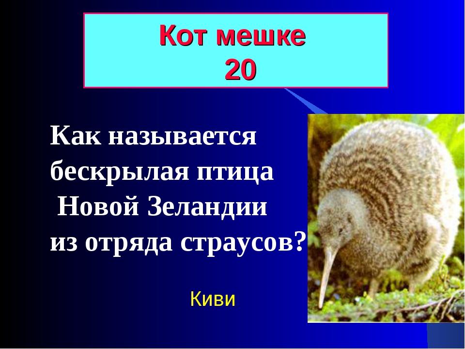 Как называется бескрылая птица Новой Зеландии из отряда страусов? Кот мешке 2...