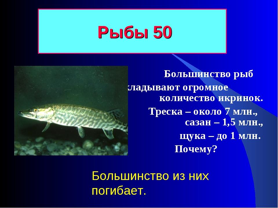 Большинство рыб откладывают огромное количество икринок. Треска – около 7 мл...
