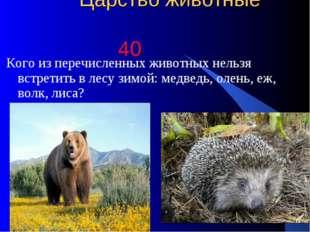 Царство животные 40 Кого из перечисленных животных нельзя встретить в лесу з