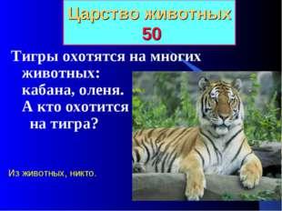 Царство животных 50 Тигры охотятся на многих животных: кабана, оленя. А кто о