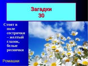 Загадки 30 Стоят в поле сестрички – желтый глазок, белые реснички Ромашки