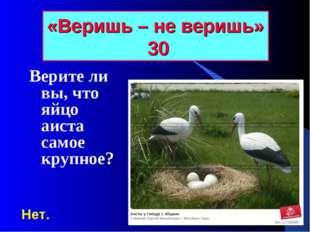 «Веришь – не веришь» 30 Верите ли вы, что яйцо аиста самое крупное? Нет.